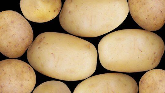 Pommes de terre blanche